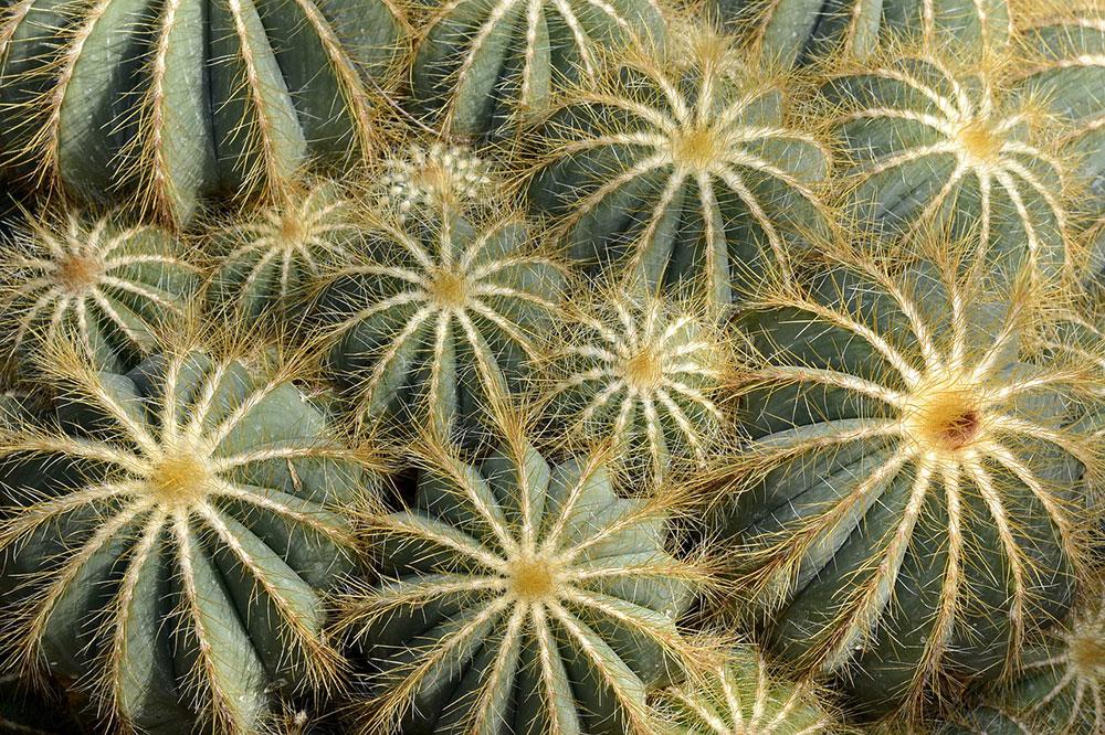 Zaai cactussen binnen