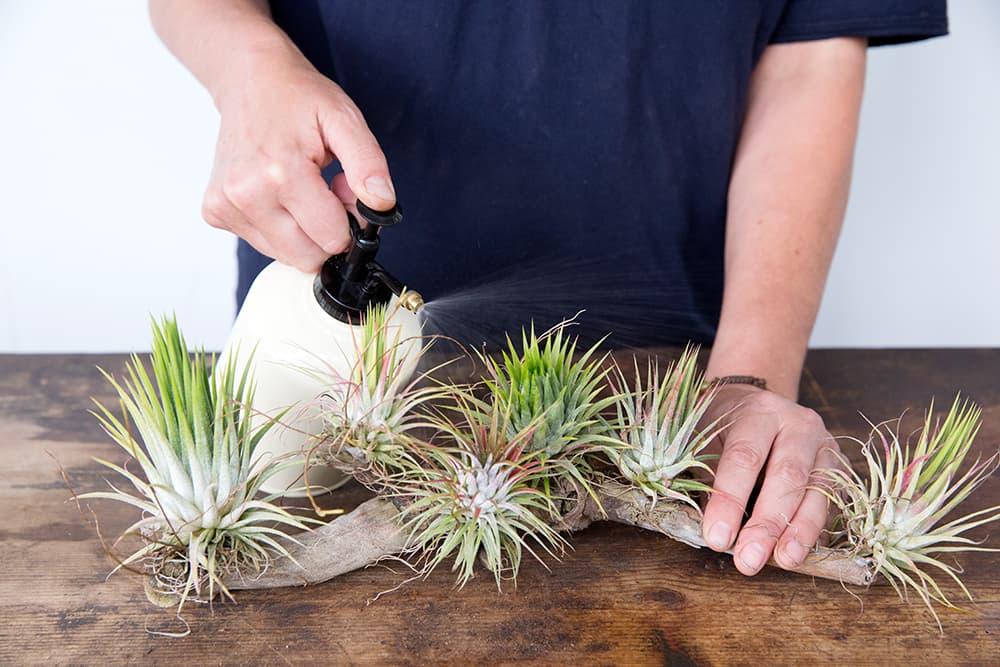 kamerplanten benevelen