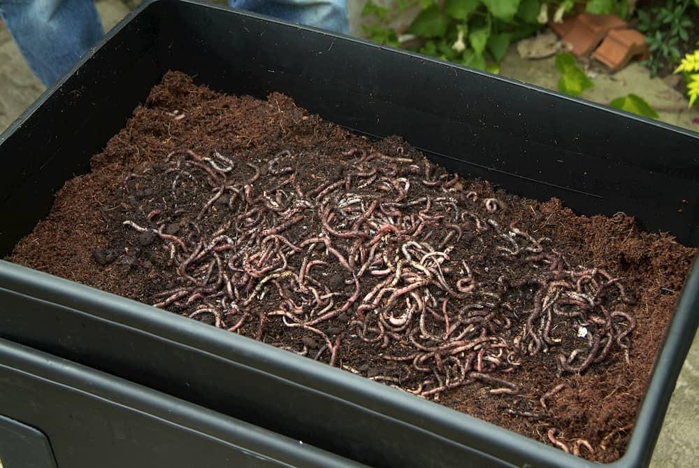 Compost maken met een wormenbak