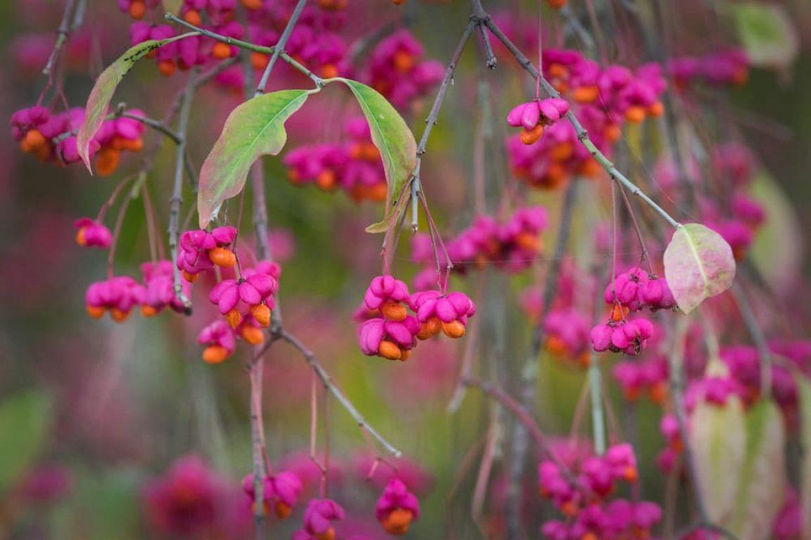 bessenstruiken voor de herfst