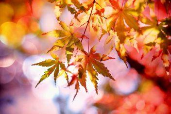 bomen voor mooie herfstkleuren