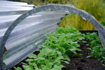 Groenten kweken in de winter