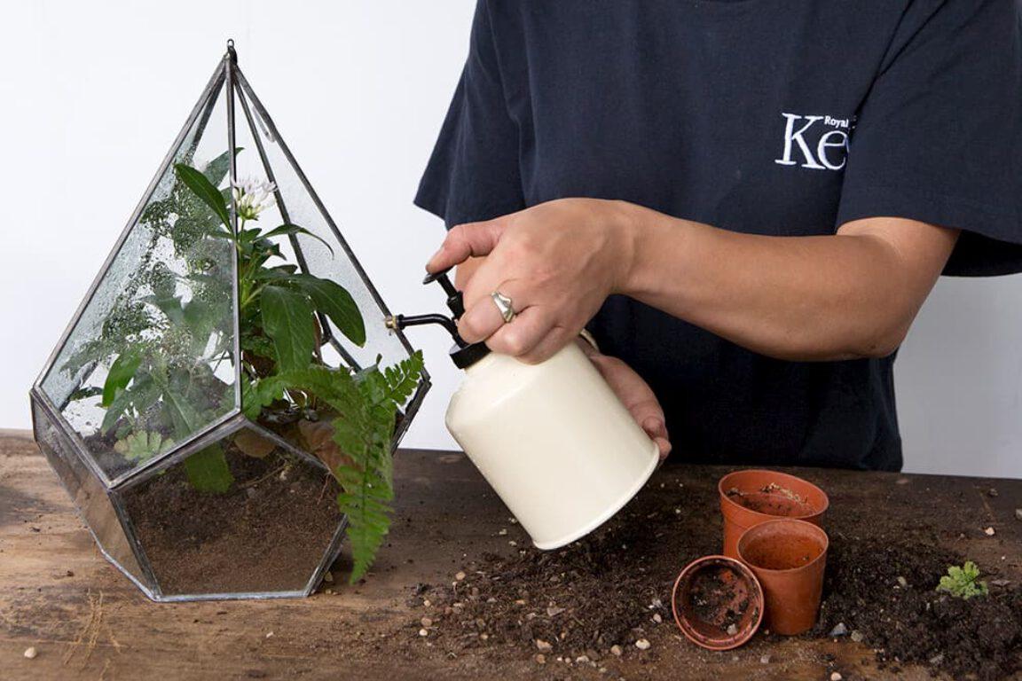 Afbeelding voor Kamerplanten water geven lastig? Dit zijn de basistips