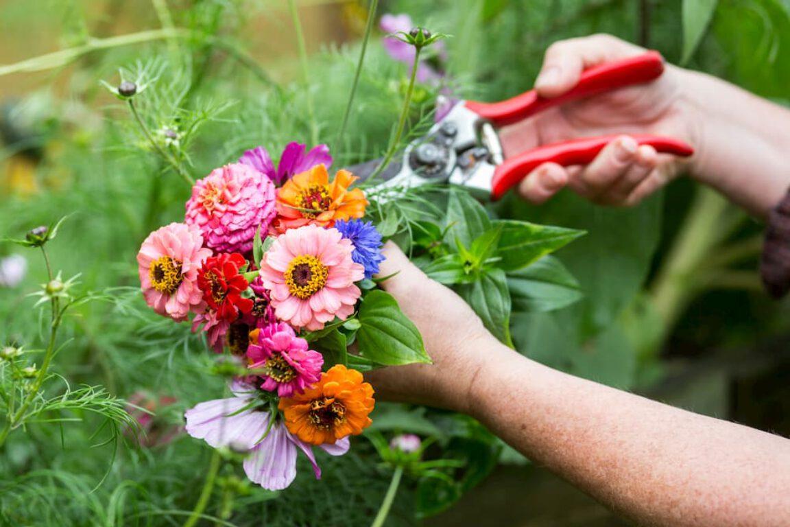 Tips voor het schikken van snijbloemen