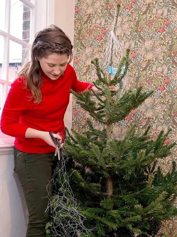 Verwijder het net van de boom als laatste
