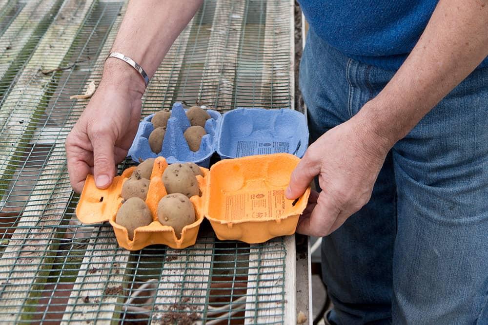 Zet de aardappelen op een lichte plek