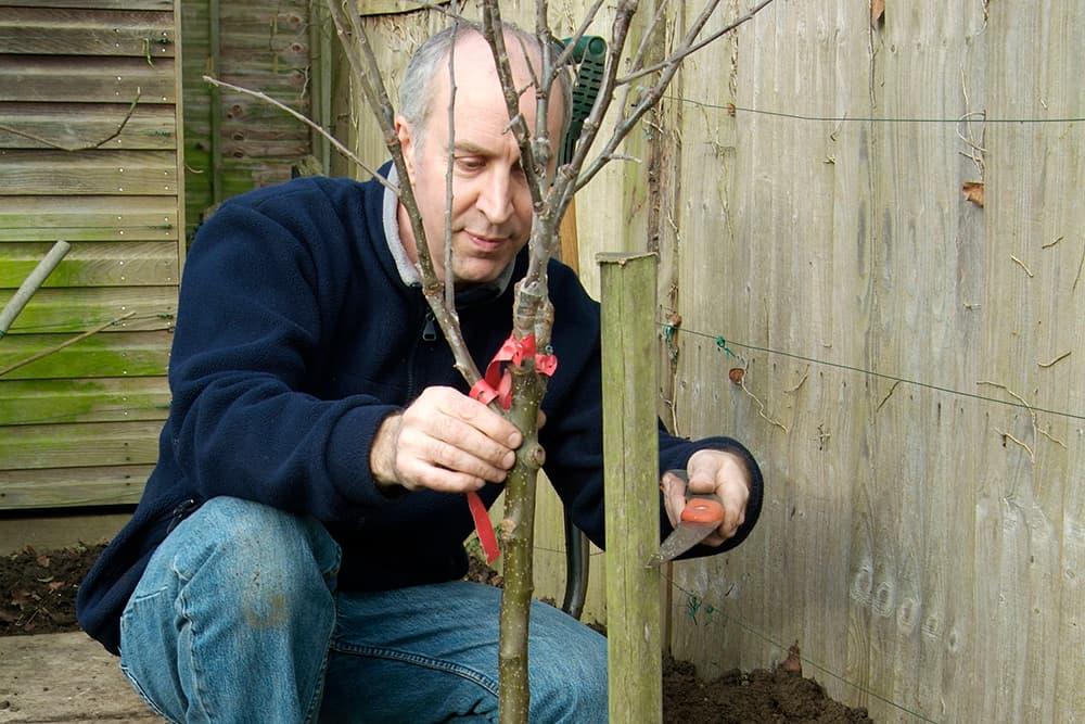 Zet een boompaal in het plantgat van je fruitboom met kale wortels.