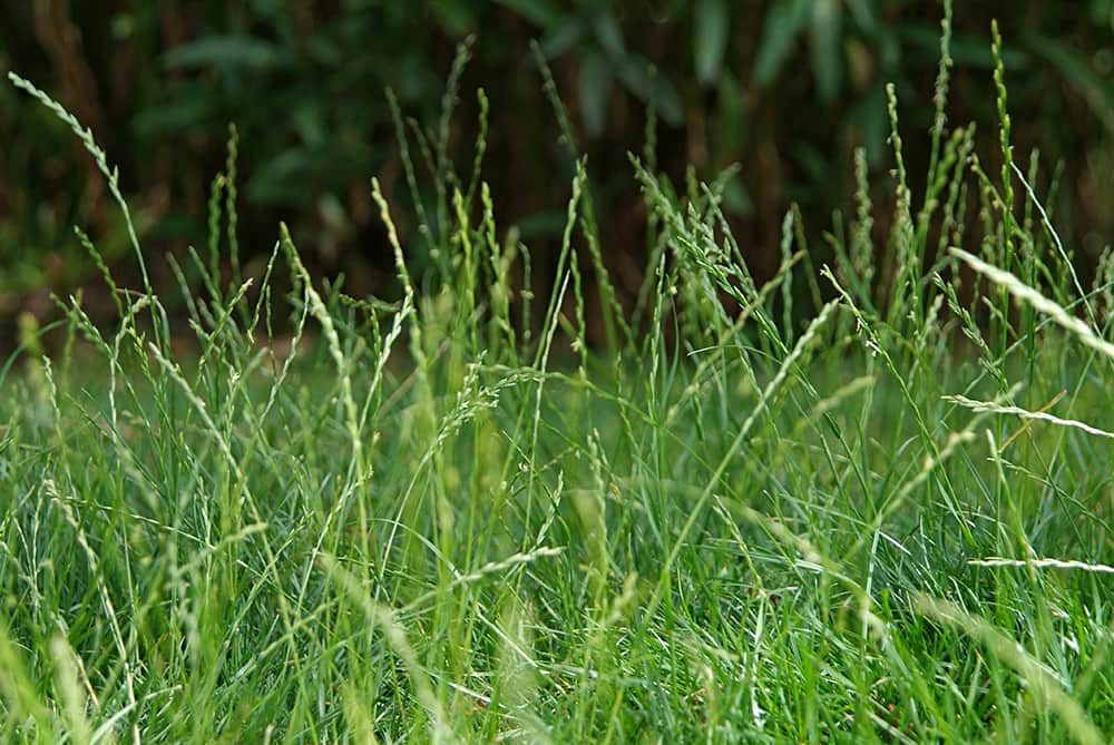 Veel dieren houden hu winterslaap in hoog gras.