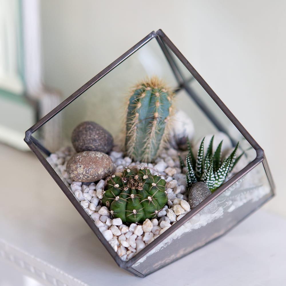 planten terrarium woestijn thema
