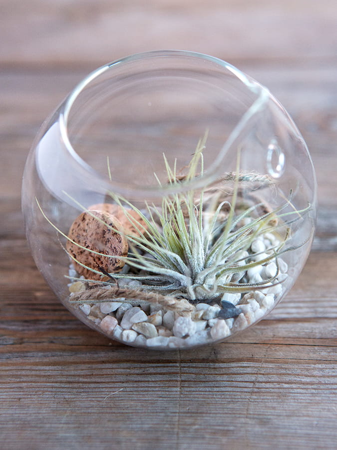 planten terrarium met zee thema