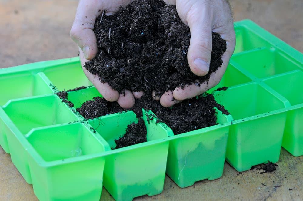 Tuinbonen zaaien in een zaaitray.