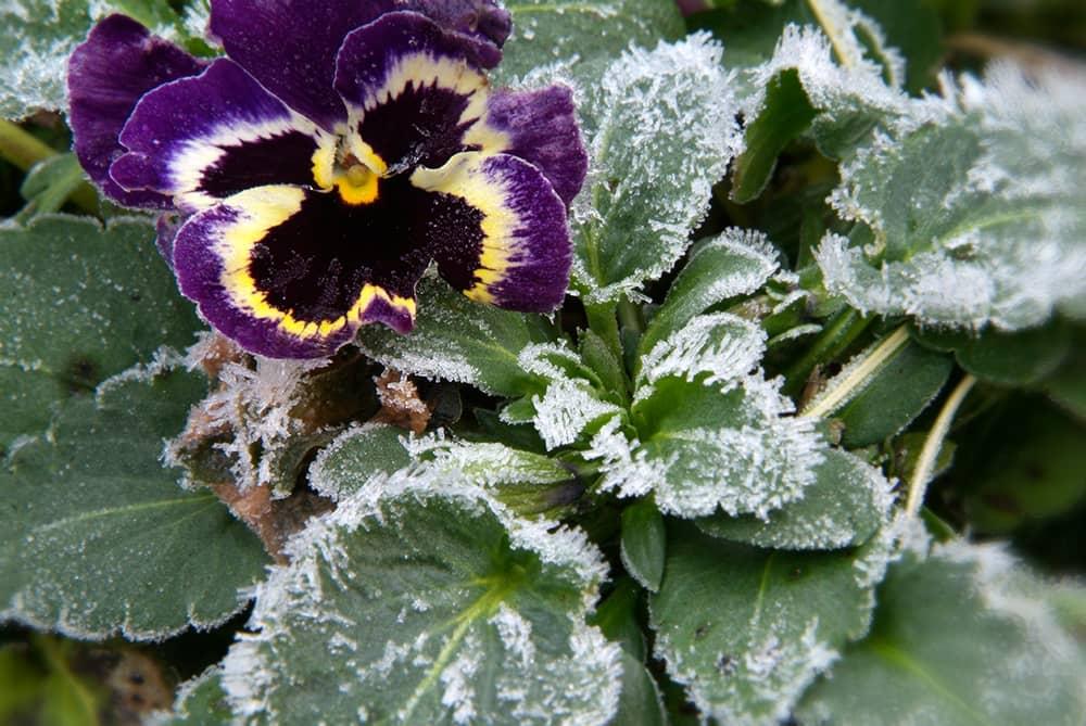 checklist januari: blijf winterviooltjes koppen