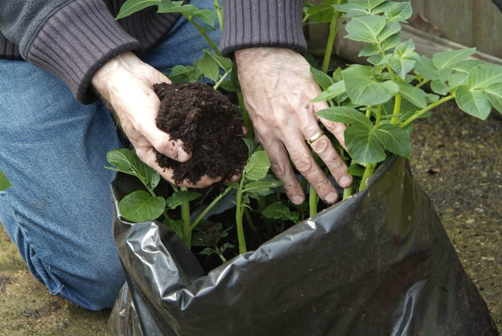 Aard de aardappelen in een zak regelmatig aan.
