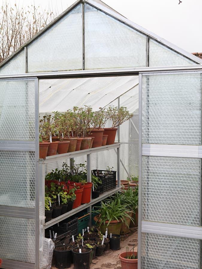Planten beschermen tegen vorst in een kas.