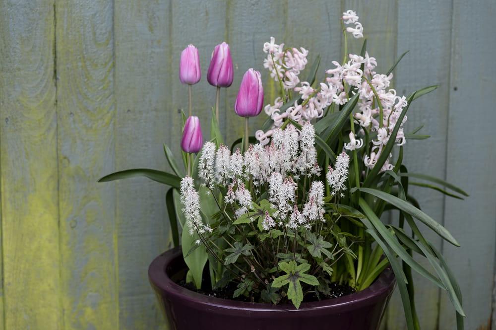 bloembak ideeën voor de lente