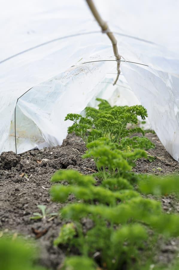Bescherm planten met een cloche