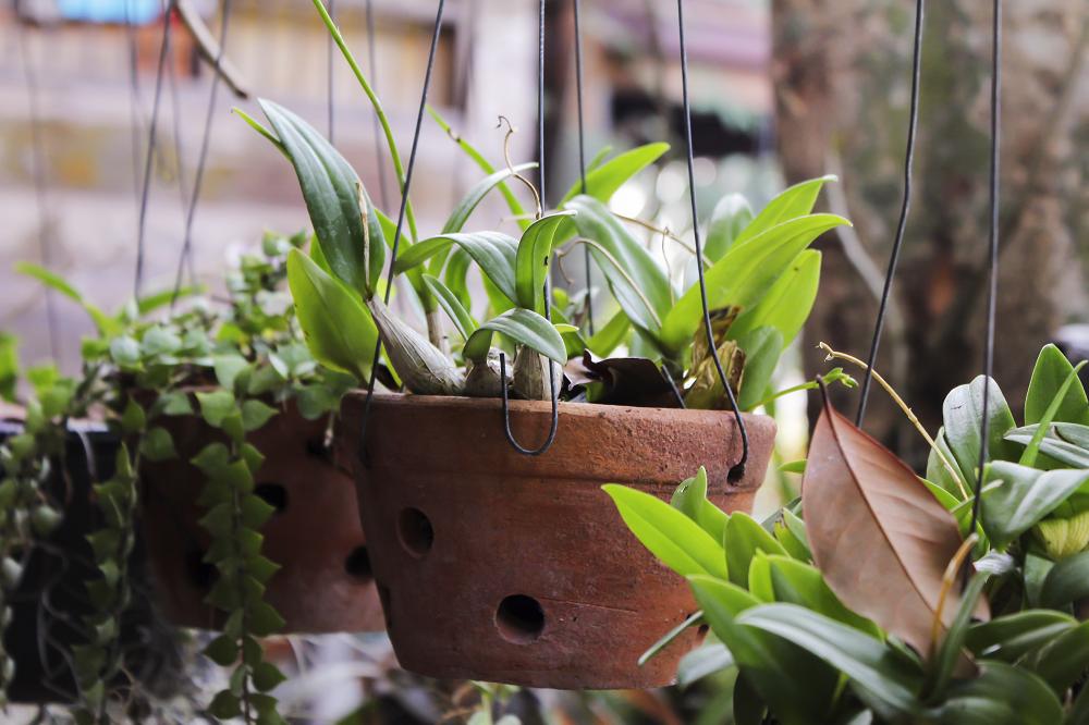 Checklist voor de tuin: kamerplanten voeden