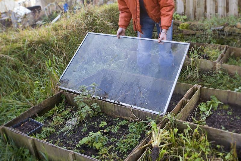 Planten beschermen tegen vorst in een koude bak