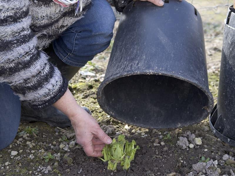 Planten beschermen tegen vorst onder een pot.