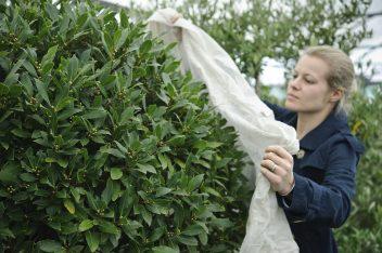 planten beschermen tegen vorst