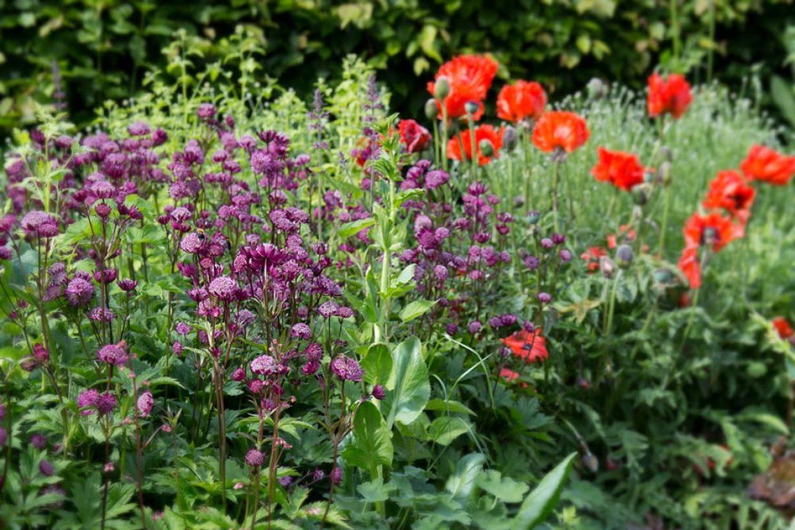 vaste planten voor vlinders en bijen: gekleurde border