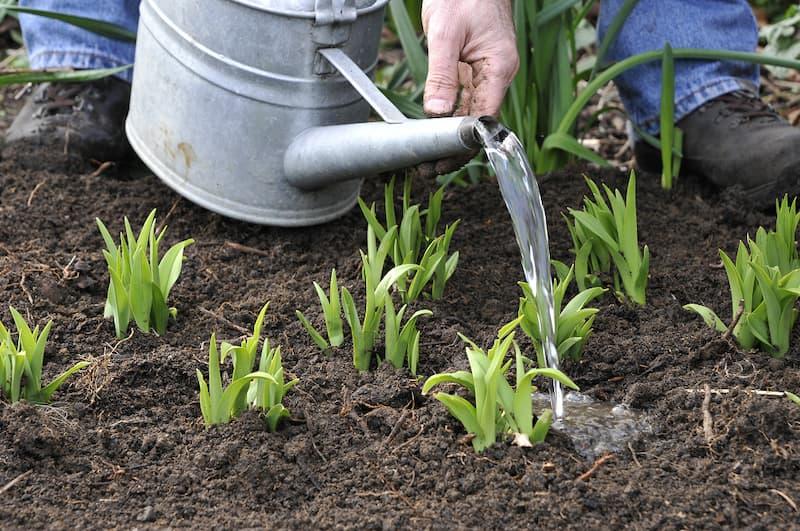 Herplant de stukken van de gedeelde plant.