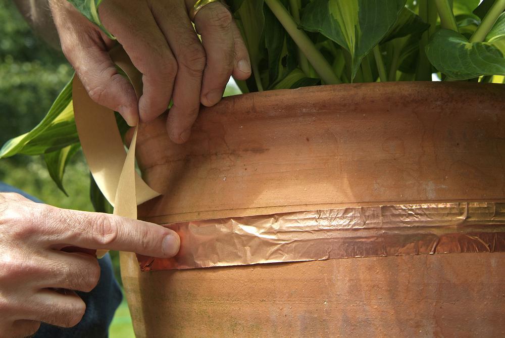 checklist week 13: bescherm hosta's in potten met kopertape