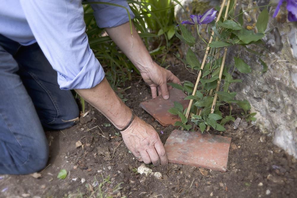 Clematis planten stap 3