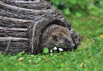 Egels in je tuin helpen