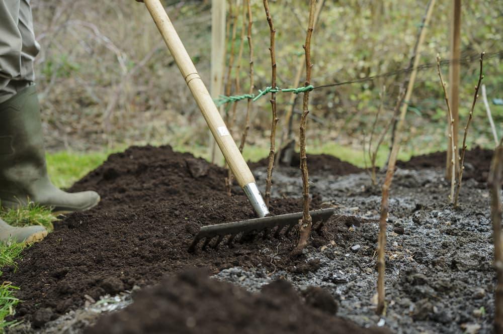 Verdeel de mulch gelijkmatig met een hark