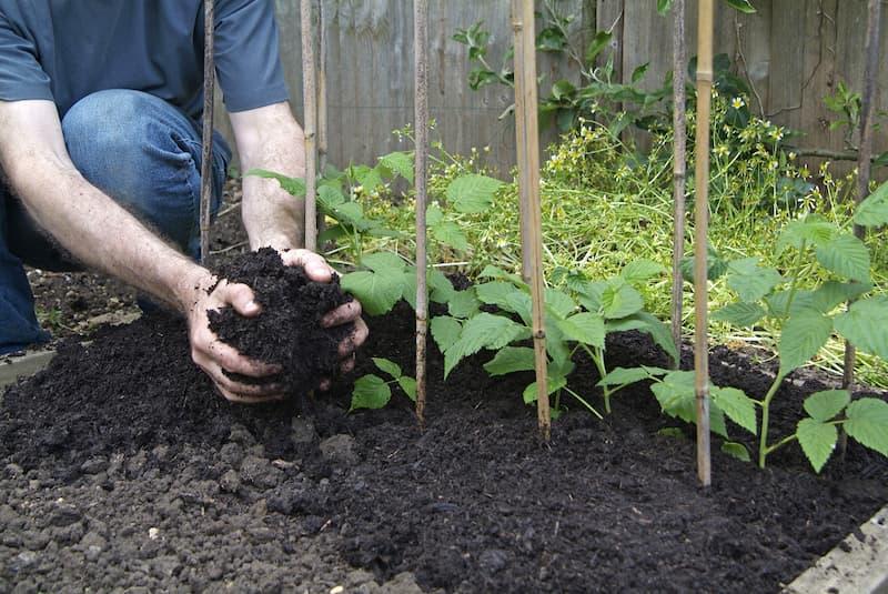 Mulch aanbrengen rondom fruitstruiken