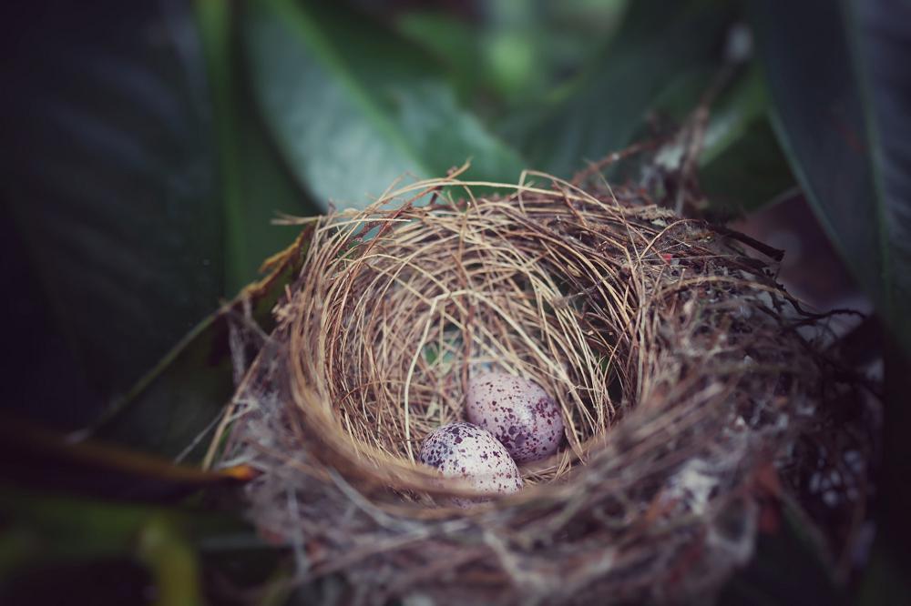 Snoeien in april: pas op vogelnesten
