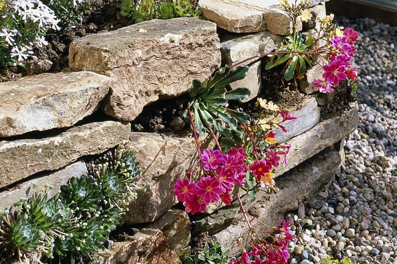 Laat gaten in muren zitten voor wilde bijen
