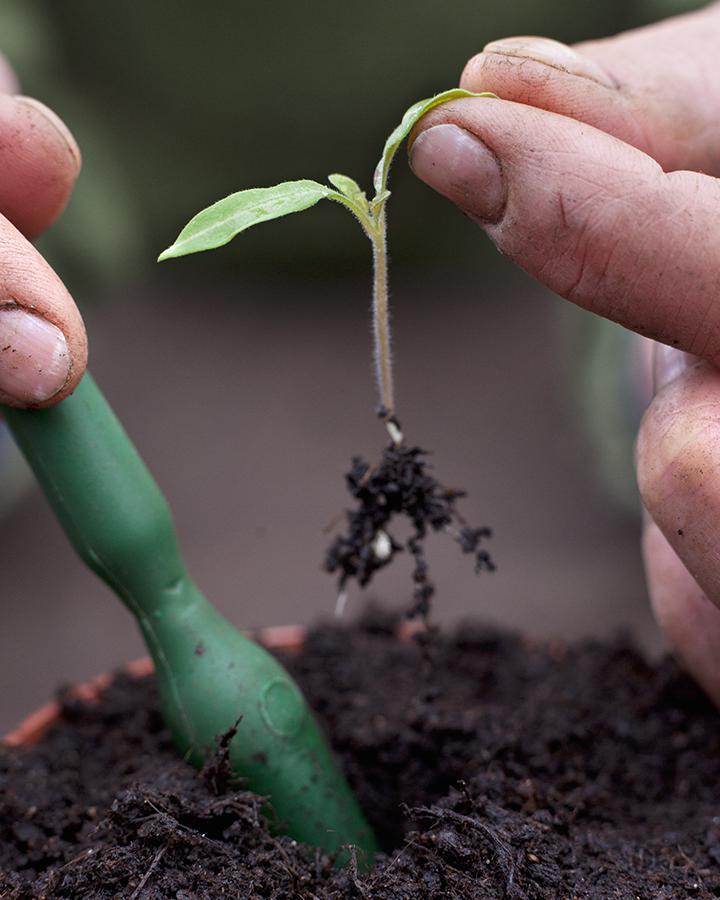 Zaailingen verspenen: maak het plantgat