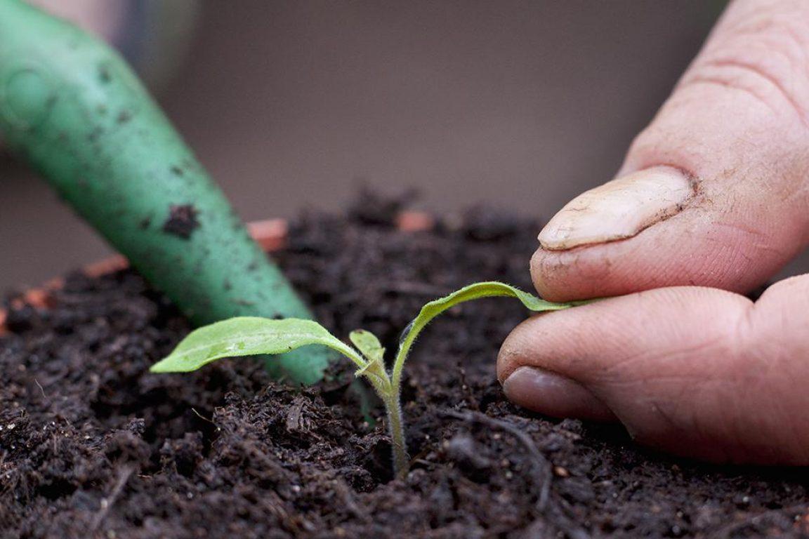 Duw de zaailing in het plantgat