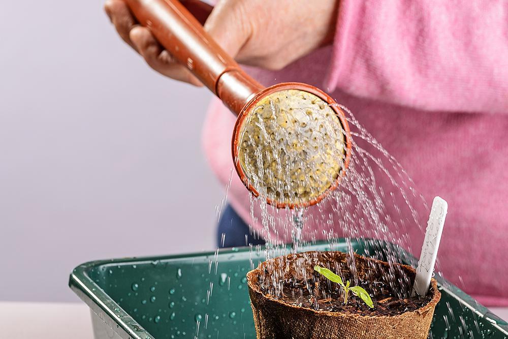 Geef de verspeende zaailing water