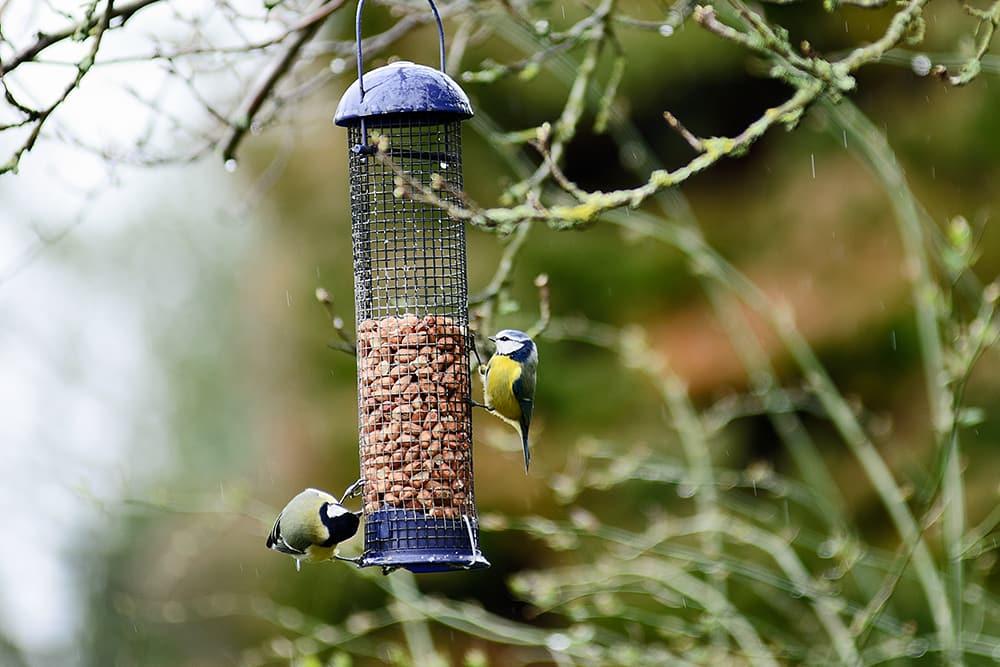 Voedersilo voor vogels