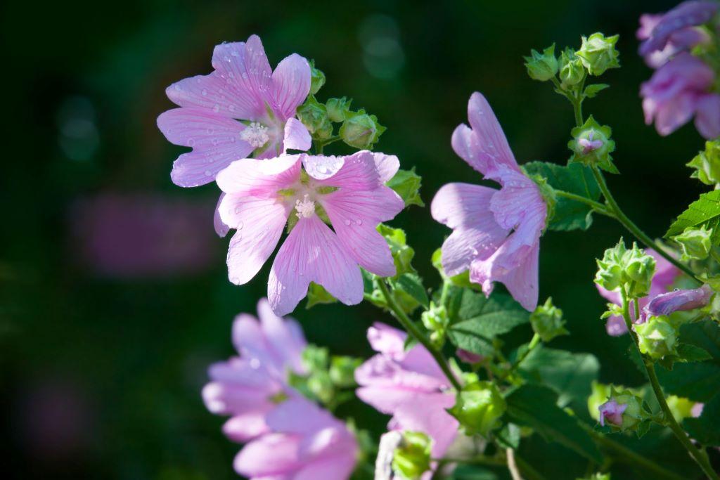 Biologische vaste planten Natural Bulbs