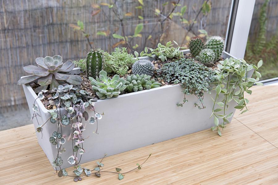 Checklist week 17: voed cacti en vetplanten