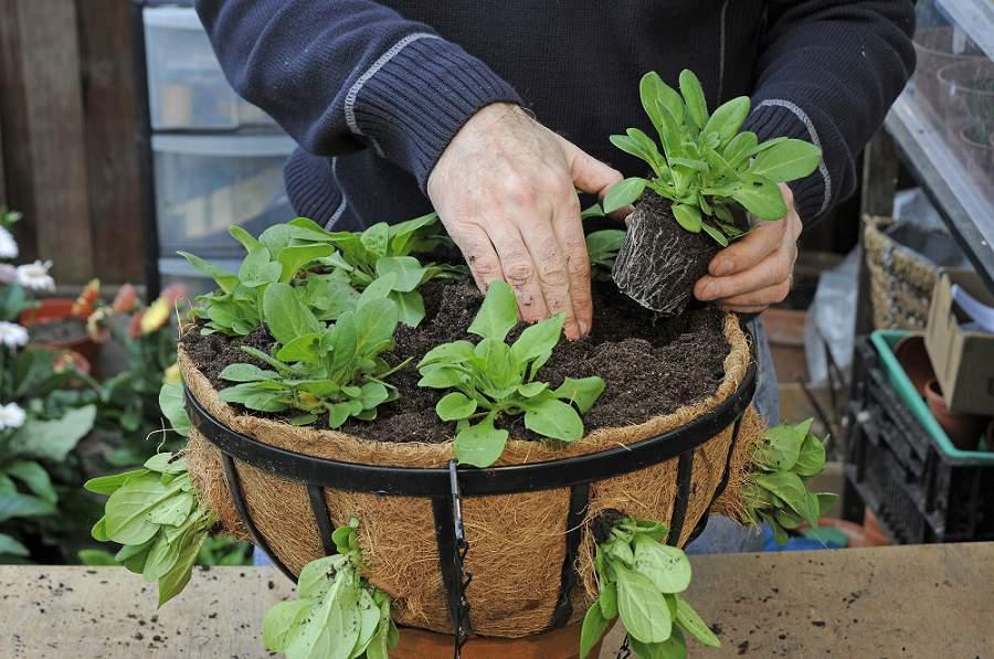 Hanging baskets beplanten