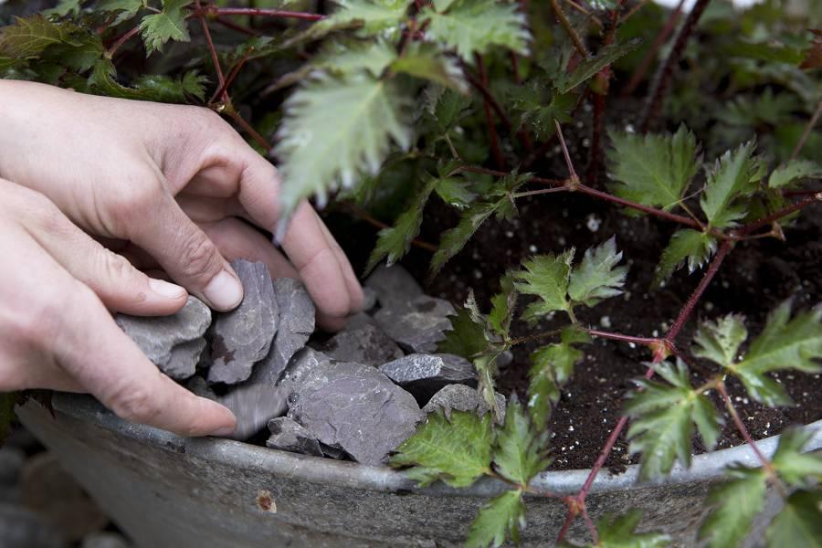 Vul je moerastuin in bak af met steentjes