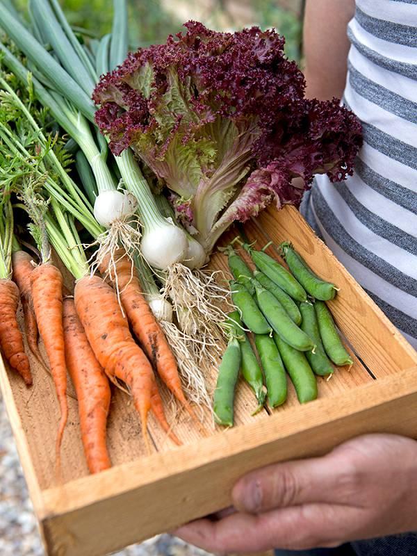 Moestuin beginnen met makkelijke groenten