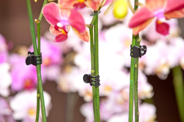 NATURE orchideeënclips