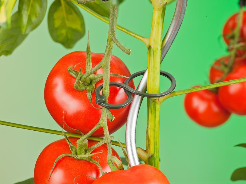 NATURE plantenringen