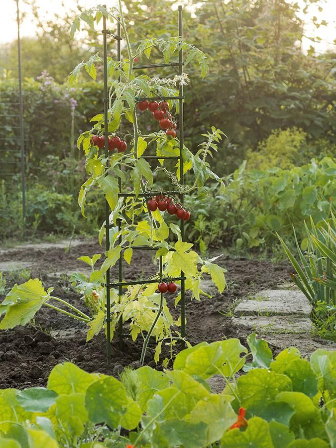 NATURE plantensteun driehoek voor tomaten