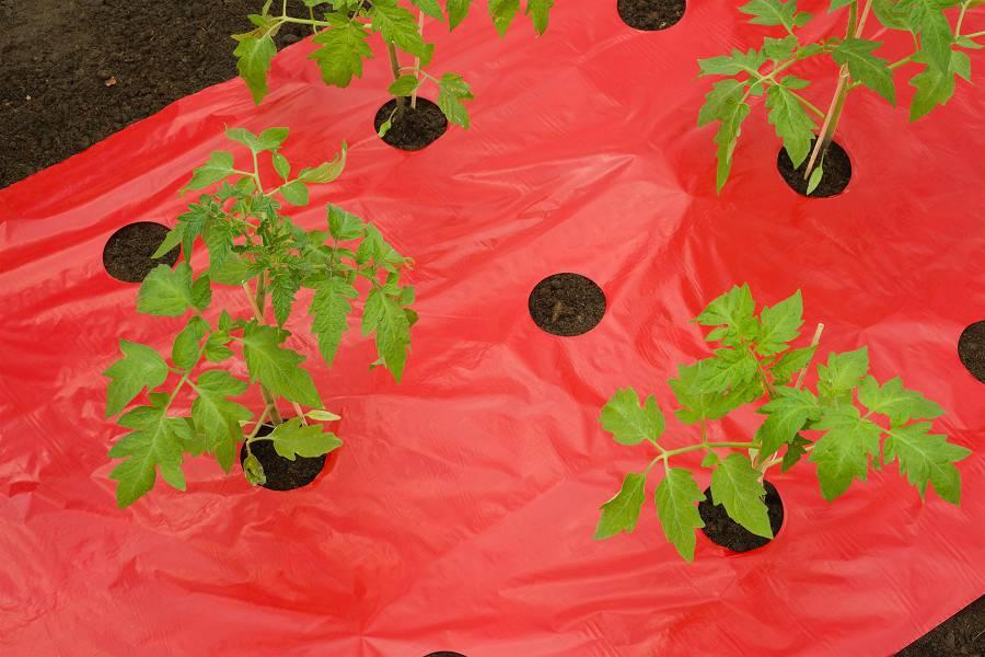 NATURE tomaten kweekfolie