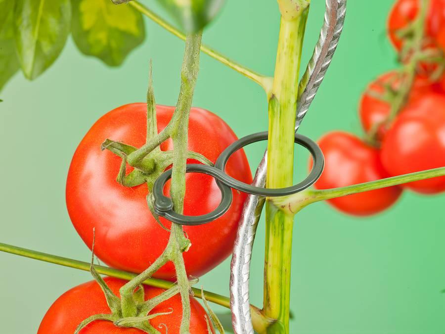 NATURE tomaten ringen