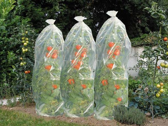 NATURE tomatenfoliehoes