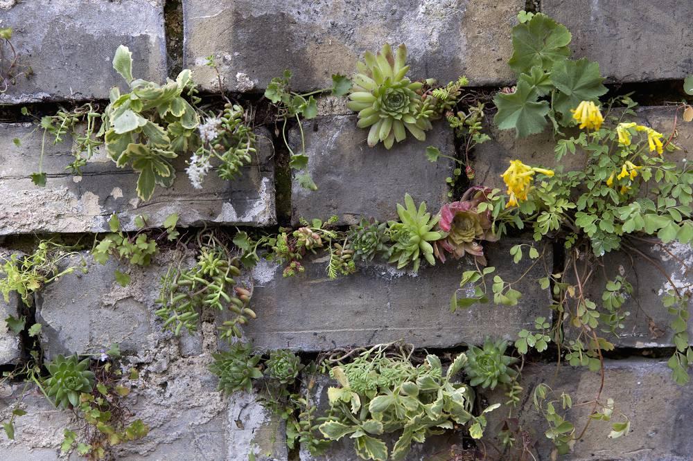 Rotsplanten voor in kieren en scheuren