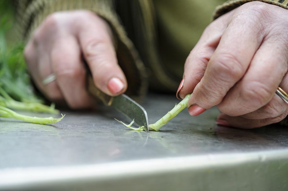 Snijd de onderkant van de stek bij